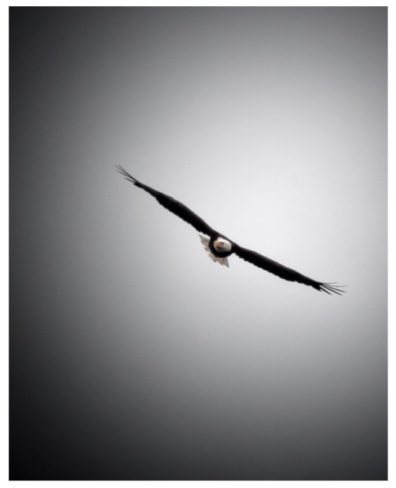 Ed Stevens Bird